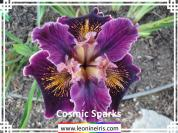 Leonine%20Iris%20Introductions%2FCosmic%20Sparks%20.jpg