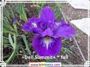 %2BDell%20Summit%2B%20~%20fall%20.jpg