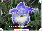 Band%20of%20Showers%20~%20fall%20.jpg
