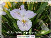 %2BSolar%20Winds%2B%20pr%20Xsp-az%20~%20fall%20.jpg