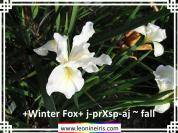 %2BWinter%20Fox%2B%20j-pr%20Xsp-aj%20~%20fall%20.jpg